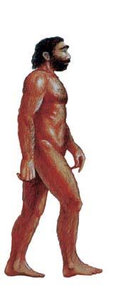 Homo Sapiens Sapiens Modern Humans
